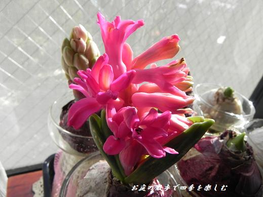 hiyasinsu6_20130119095927.jpg