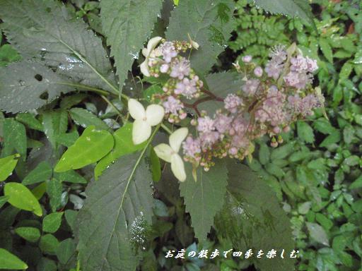 kumamoto14.jpg