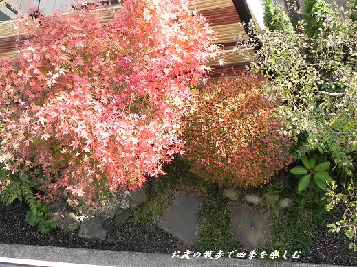 momiji5_20121201225438.jpg