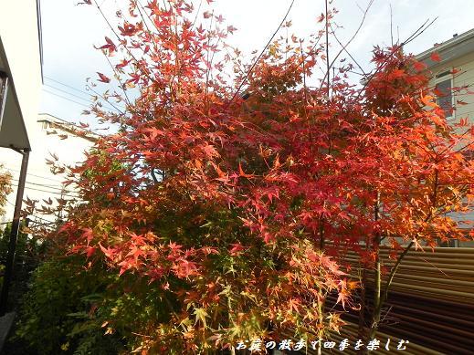 momiji8_20121201225442.jpg
