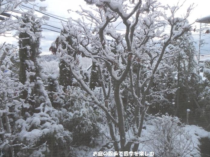 yuki_20140205175827e1b.jpg