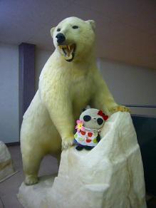 白クマのはく製