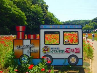 くりはま花の国ポピー園で記念撮影