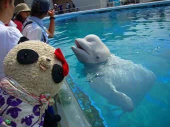 白イルカと白おばぶ