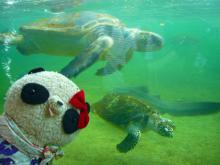 海ガメとばぶちゃん