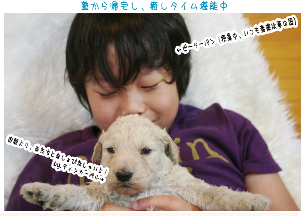 ゴールデンドゥードルの子犬と息子
