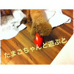 moblog_8168d67a.png