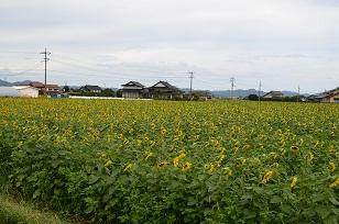 201209195.jpg
