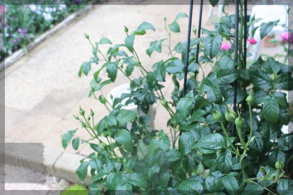 庭づくり DIY メインガーデン横 テラス脇