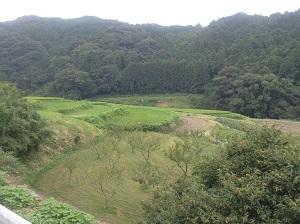 IMG_1877山