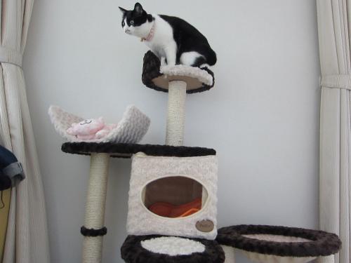 猫タワー三代目