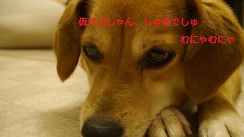 _1030136_convert_20130826113833.jpg