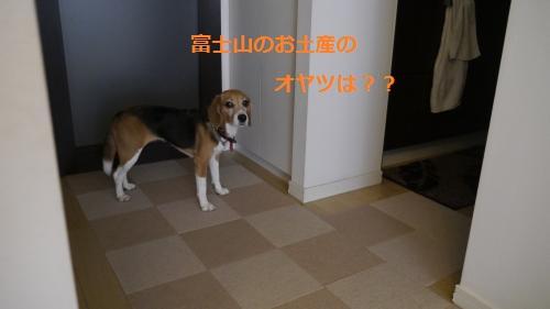 _1030245_convert_20130826114335.jpg