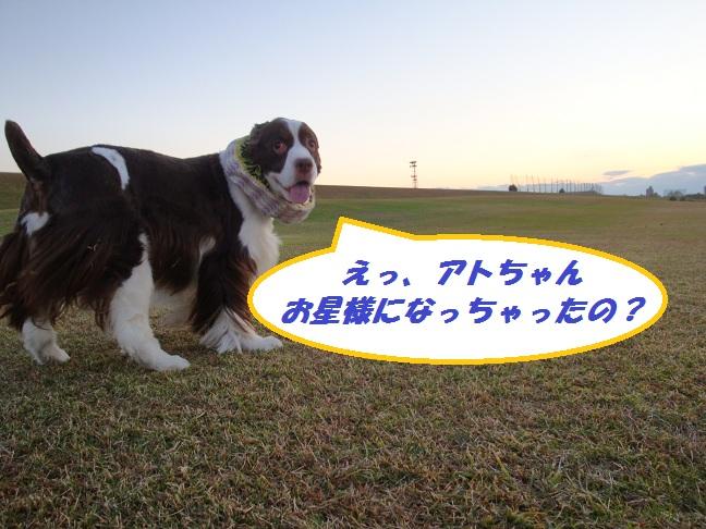DSC06638 ブログ用