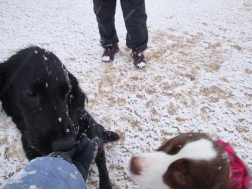 雪~☆オペルちゃんと・・・・