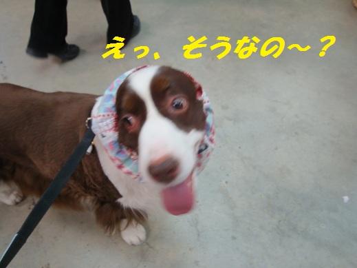 DSC06971 ブログ用