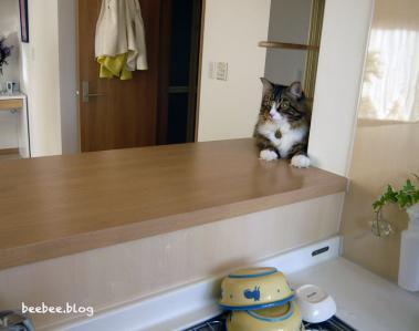 飼い猫のゾーン