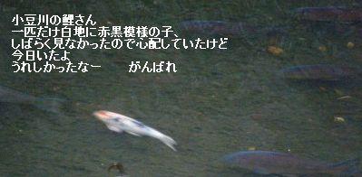 s-1210090004.jpg