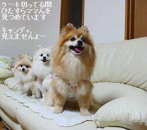 s-IMG_0512_20120608000730.jpg