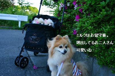 s-IMG_4291.jpg