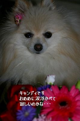 s-IMG_4418_20121230223845.jpg