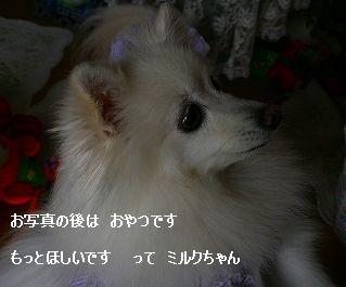 s-IMG_5328.jpg
