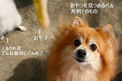 s-IMG_5438.jpg
