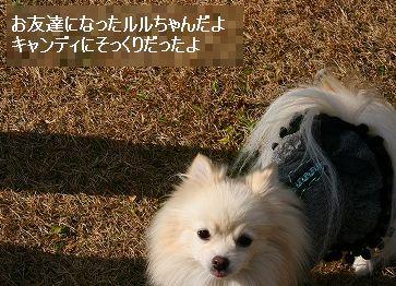 s-IMG_5466_20121202000754.jpg