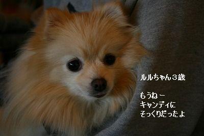 s-IMG_5501_20121202003218.jpg