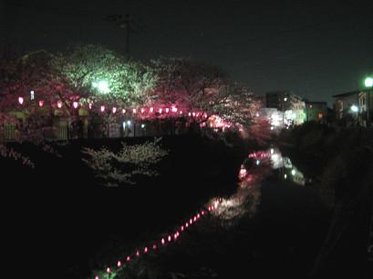 sakura2012-10.jpg