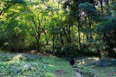 201210四季の森4