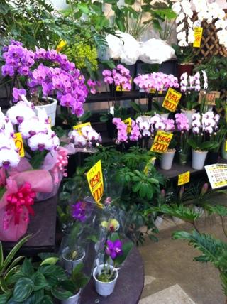 fc2blog_20120731151842e19.jpg