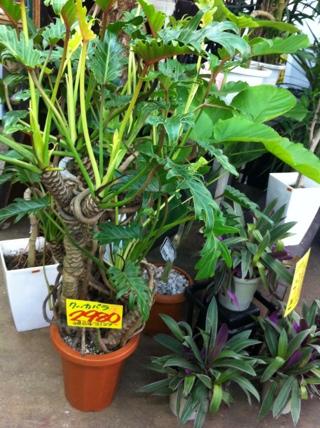 fc2blog_201207311518572cb.jpg