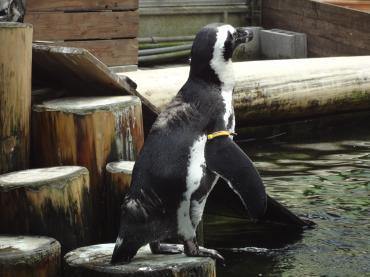 ペンギンゾーン