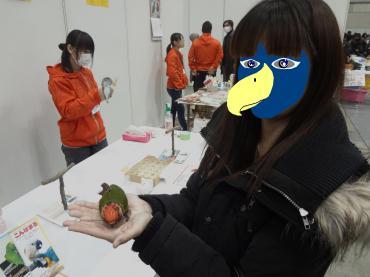 鳥人間コンテスト