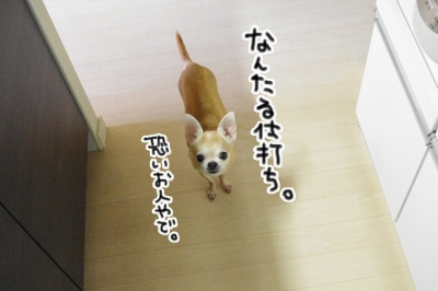 IMGP3915-10.jpg
