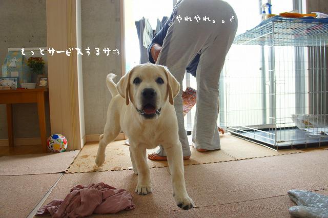 12_20121031085332.jpg