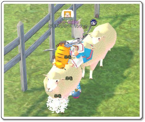 120808羊毛刈りs