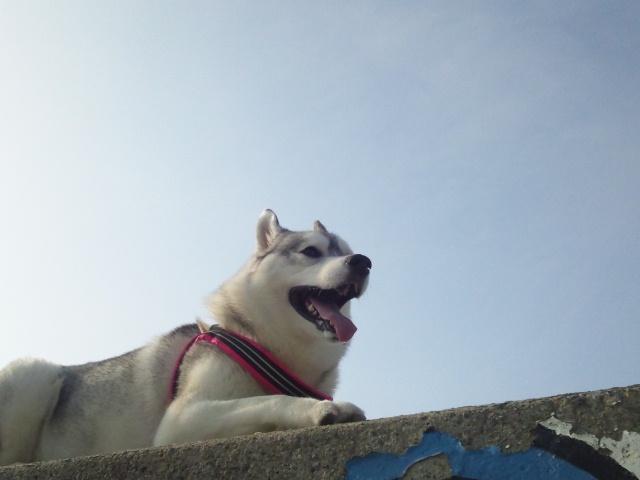 13-08-15-2riisu-isinomaki
