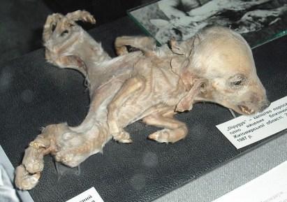 Kiev-UkrainianNationalChernobylMuseum.jpg
