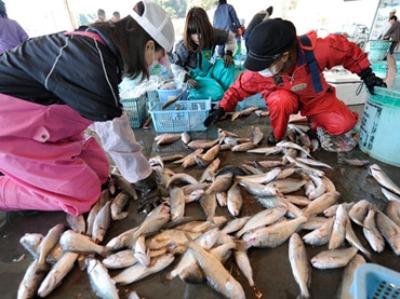 japanese-nuclear-hirakata-fish_n.jpg
