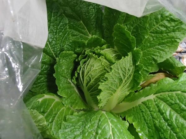 白菜1211201