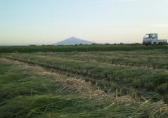 稲刈9_600