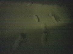 積雪11-12_600