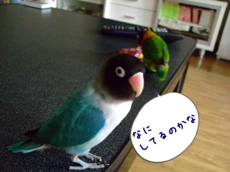 041_20121012193806.jpg
