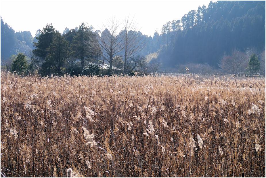 冬のとんぼの沼