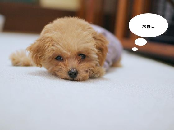 ごはんが食べたい犬