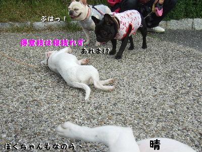 4月15日民族公園 022