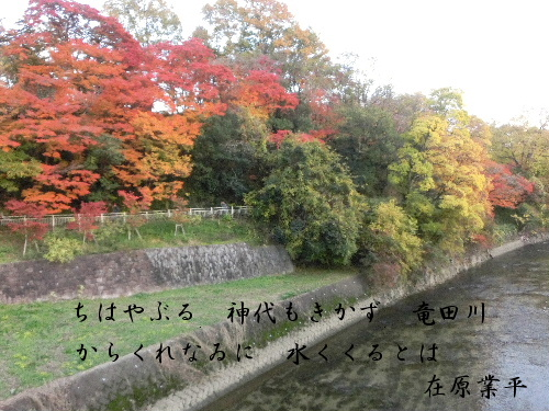 2012_112411月24日奈良0060