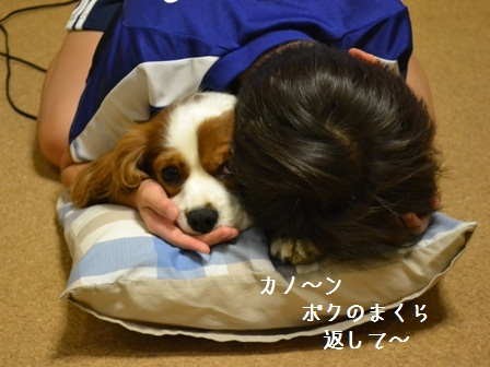 DSC_0040 (7)ボクの枕